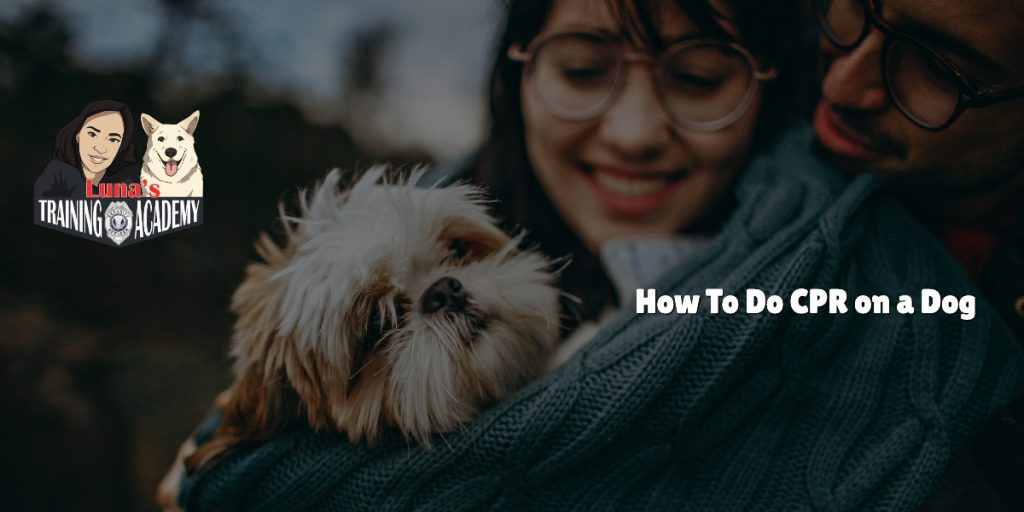 How To Do CPR on a Dog 1